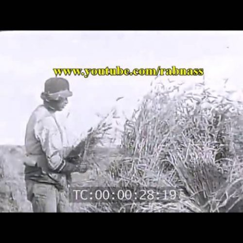 Vidéo: des paysans Kabyles filmés en 1913