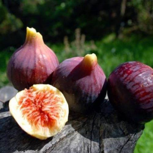 La labellisation de la figue de Beni-Maouche sera validée en mai prochain