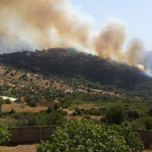 Bouzeguène:  Plusieurs blessés et des dizaines de figuiers et d'oliviers partis en fumée